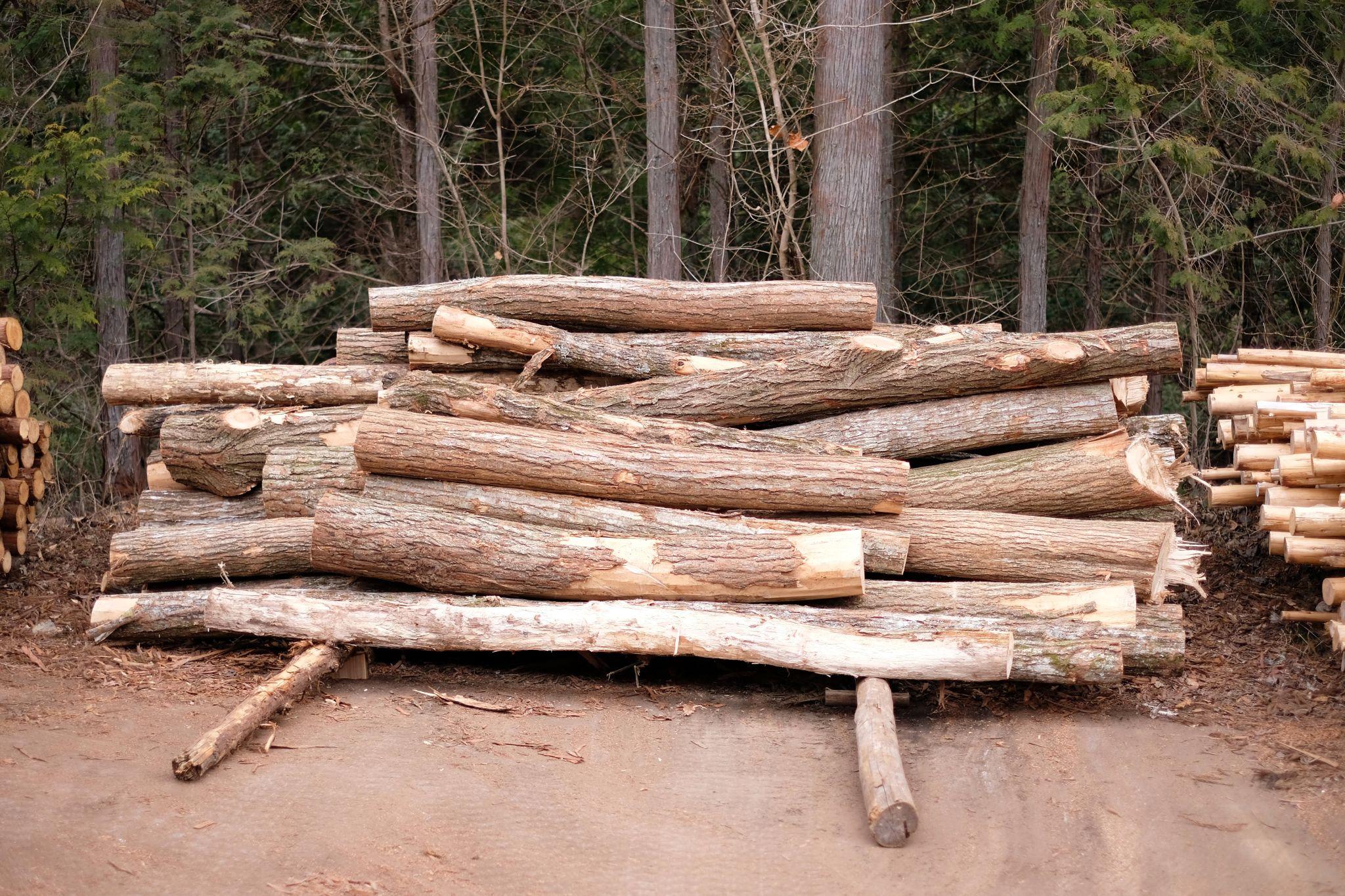 木が切られているなぁという記録写真